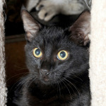 Adopt a Pet: Ozzy and Harriet