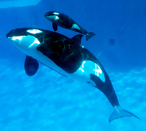 (Photo by Mike Aguilera / SeaWorld San Diego)