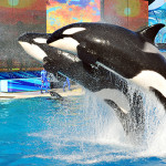 SeaWorld presents plans to expand orca habitat in San Diego