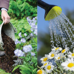 How to garden wisely during a severe drought