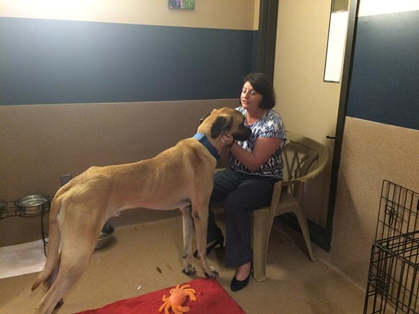 Assembly Speaker Toni G. Atkins hugged a Great Dane during a Humane Society event. (Courtesy of Toni G. Atkins
