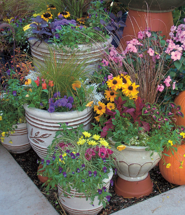 Container gardens are perfect for apartments or condos. (Courtesy of Armstrong Garden Centers)