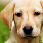 Is your pet experiencing a medical emergency?