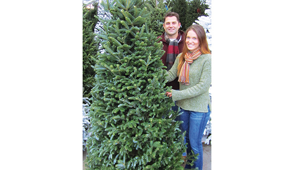 Fraser fir (Courtesy of Armstrong Garden Centers)