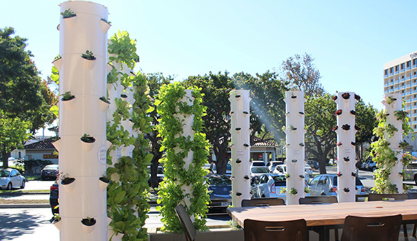 Tender Greens brings its unique aeroponic tower gardens to Mission Valley (Photo by Ellen Lu)