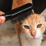 Six benefits of brushing your cat