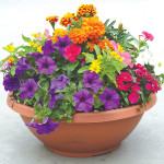 Get your garden 'party ready' for spring with a pop of color