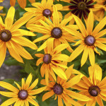 Vital step: Attracting pollinators to your garden