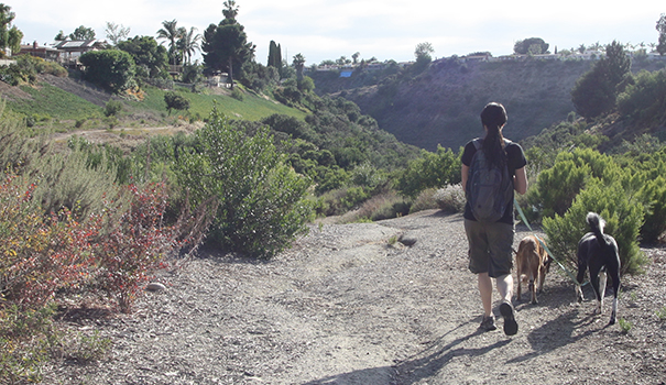 A hiker walks her dogs along the Shawn Avenue entrance to Ruffin Canyon. (Photo by Jeff Clemetson)