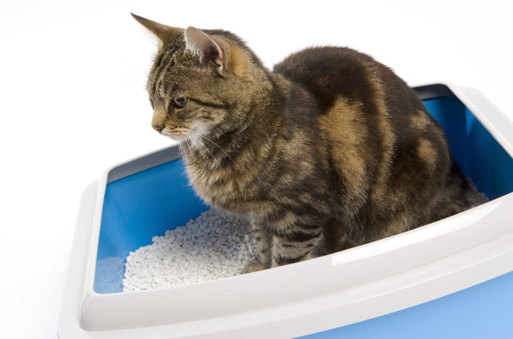 Cat uses litter box but pees on flooring