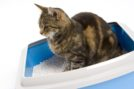 Choosing a litter your cat prefers is important for both your and your cat's health. (almonature.com)