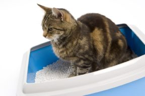 What to spray on carpet to keep cats from peeing