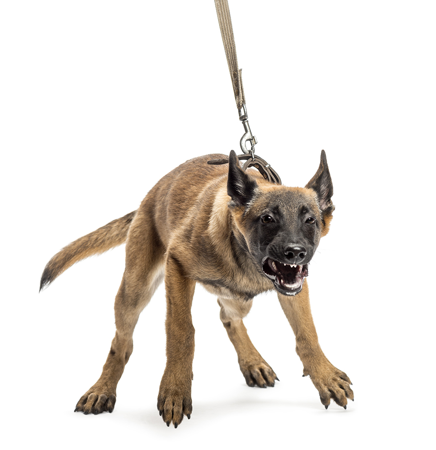 Best Way To Stop Your Dog Pulling On The Lead