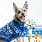 Don't take pets for granted during holidays