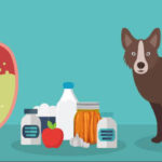 Antibiotics and probiotics for pets