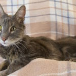 Recognizing and treating hyperthyroidism in cats
