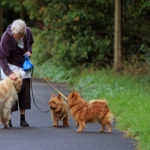 10 benefits of walking your dog daily