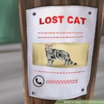 Finding a lost cat