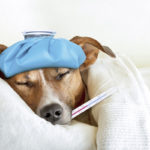 How to deal with canine influenza